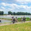 Rhein Eko 081-14