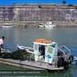 Austernfischer auf Ille d Oleron Eko 031-04