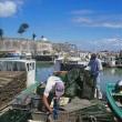 Austernfischer auf Ille d Oleron Eko 031-18